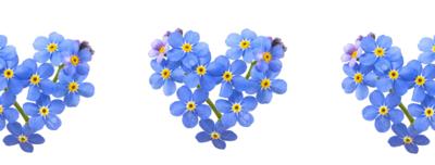 – Actie: Vergeet-me-nietjes voor Alzheimer Stichting